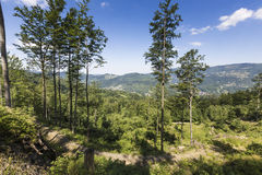 Ландшафт горы от Skrzyczne Горный склон покрытый с сосной tr Стоковые Фотографии RF