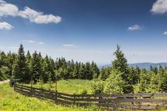 Ландшафт горы от Skrzyczne Горный склон покрытый с сосной tr Стоковое Изображение