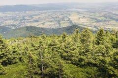 Ландшафт горы от Skrzyczne Горный склон покрытый с сосной tr Стоковая Фотография