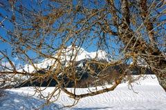 Ландшафт горы снега зимы ветвей дерева Стоковое фото RF