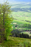 Ландшафт горы с елью и зеленой долиной с tre Стоковая Фотография RF