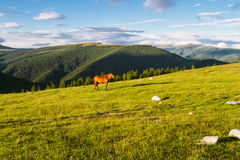 Ландшафт горы с лошадями Стоковое фото RF