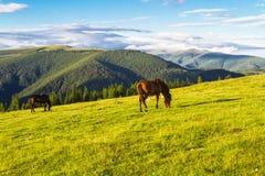 Ландшафт горы с лошадями Стоковые Изображения RF