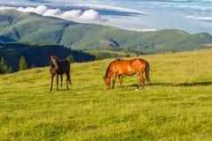 Ландшафт горы с лошадями Стоковые Фото