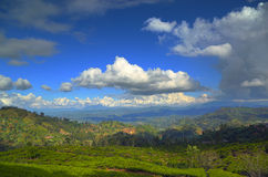 Ландшафт горы с плантацией чая Стоковая Фотография