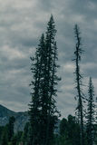 Ландшафт горы с силуэтами сосны Стоковая Фотография