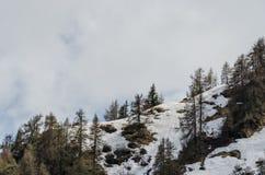 Ландшафт горы с снегом и деревьями Стоковая Фотография