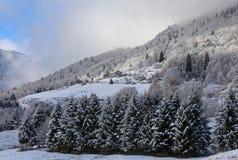 Ландшафт горы с сосной и лиственницей ели погрузил в воду снегом Стоковое Фото