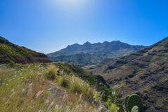 Ландшафт горы с утесами и соснами в острове Gran Canaria, Испании Стоковое Изображение