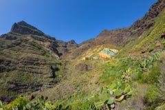 Ландшафт горы с утесами и соснами в острове Gran Canaria, Испании Стоковые Изображения RF