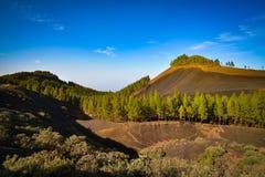 Ландшафт горы с утесами и соснами в острове Gran Canaria, Испании Стоковое фото RF