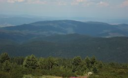 Ландшафт горы с coniferous зеленым лесом стоковые изображения