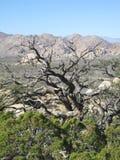 Ландшафт глуши пустыни Мохаве с взглядом гор и долина от высоко-высоты отстают Стоковые Фото