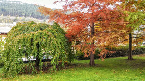 Ландшафт Деревья осени в красных и желтых тонах Золотистая осень Стоковое фото RF