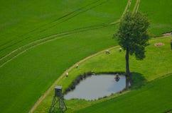Ландшафт дерева весны зеленого цвета луга вида с воздуха свежий Стоковое Изображение RF