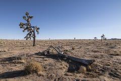 Ландшафт дерева Иешуа Стоковое Изображение