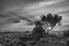 Ландшафт дерева на холме с облаками на жулике захода солнца художническом Стоковое Изображение