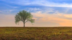 Ландшафт дерева на холме Стоковые Фото