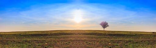 Ландшафт дерева Сакуры на холме Стоковая Фотография RF
