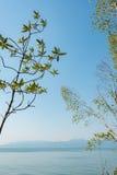 Ландшафт деревьев, моря и горы Стоковые Изображения