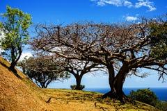 Ландшафт деревьев полдня стоковые фотографии rf