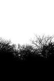 Ландшафт деревьев Стоковое Изображение RF
