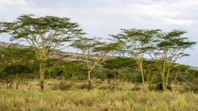 Ландшафт деревьев Acai с пасмурным голубым небом в предпосылке стоковое фото rf