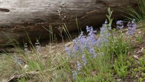 Ландшафт леса весной или лето сток-видео