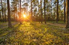 Ландшафт леса весны Стоковые Изображения