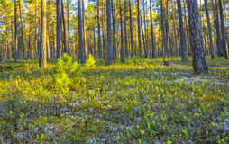 Ландшафт леса весны Стоковая Фотография