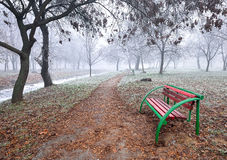 Ландшафт леса в осени Стоковая Фотография RF