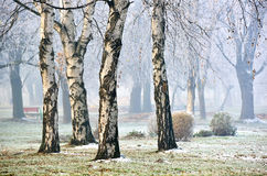 Ландшафт леса в тумане Стоковая Фотография RF