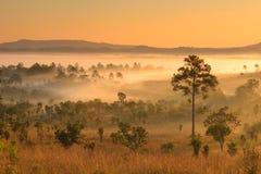 Ландшафт леса в утре Стоковые Изображения