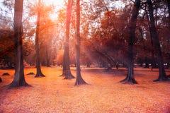 Ландшафт леса осени с лучами солнца света Стоковая Фотография RF