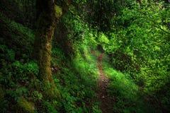 Ландшафт леса, Сицилия, Италия Стоковое Изображение RF