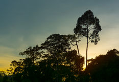 Ландшафт леса с деревьями и заходом солнца, восходом солнца Стоковые Фото