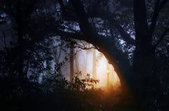 Ландшафт леса с туманом и фонариком Стоковые Изображения RF