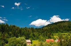 Ландшафт леса с ярким голубым небом стоковые фотографии rf