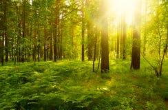 Ландшафт леса стоковая фотография