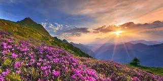 Ландшафт лета в горах. Стоковые Изображения RF
