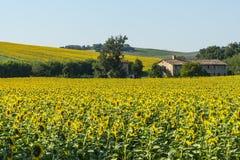 Ландшафт лета в мартах (Италия) Стоковое Изображение RF