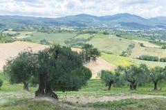 Ландшафт лета в Умбрии (Италия) Стоковые Фотографии RF