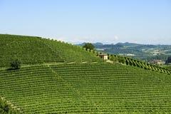 Ландшафт лета в Langhe (Италия) Стоковое фото RF