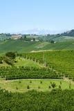 Ландшафт лета в Langhe (Италия) Стоковое Изображение RF