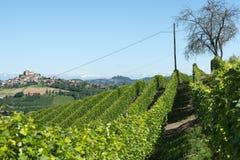 Ландшафт лета в Langhe (Италия) Стоковые Изображения RF