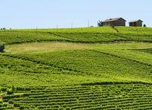 Ландшафт лета в Langhe (Италия) Стоковая Фотография RF