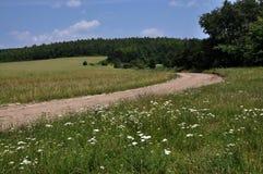 Ландшафт лета на краю поля и леса Стоковое Изображение
