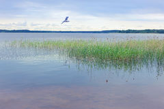 Ландшафт лета на озере Seliger Россия Стоковые Фото