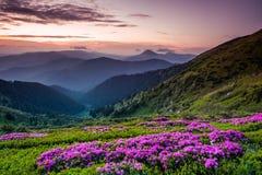 Ландшафт лета прикарпатский Стоковая Фотография