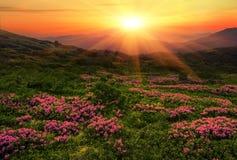Ландшафт лета прикарпатский Стоковое Изображение